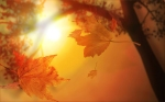autumn-fantasy-wallpapers-background-desktop-nature-maple-wallpaper-sunset-array-wallwuzz-hd-wallpaper-5179